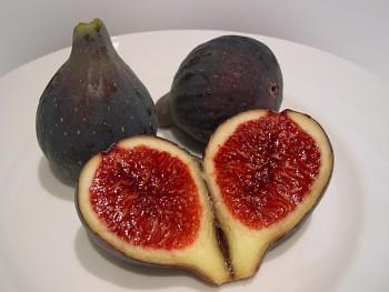 """Ficus carica ( L. ) """"BROWN TURKEY"""" - Fíkovník smokvoň - červený"""
