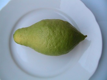 """Citrus limon """"LUNARIO"""" (L.) Burm - Citrumelo"""