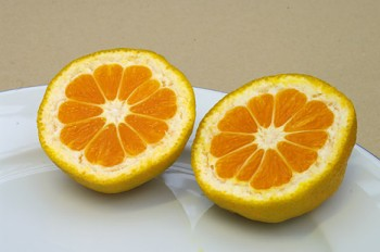 "Citrus unshiu ""SILVERHILL"" ( Marcow. ) - Poncirus"