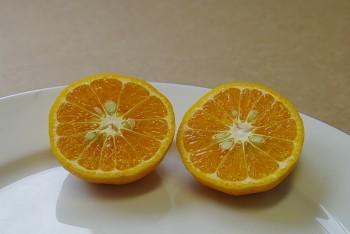 """Citrus deliciosa """"PATERNO"""" ( Ten. ) - Citrumelo"""