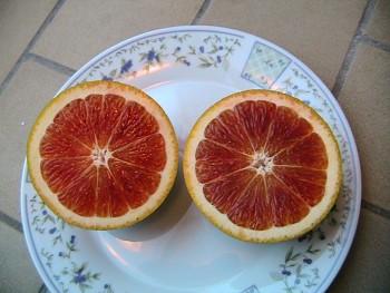 """Citrus sinensis """"TAROCCO"""" (L.) Osbeck - Citrumelo"""