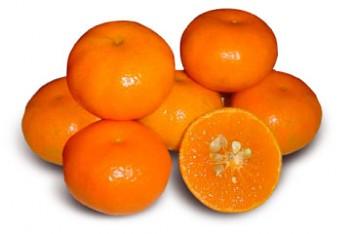 """Citrus reticulata """"MALVASIO"""" (Blanco) - Citrumelo"""
