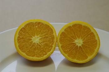 """Citrus sinensis """"HARAGUCHI"""" (L.) Osbeck - Citrumelo"""