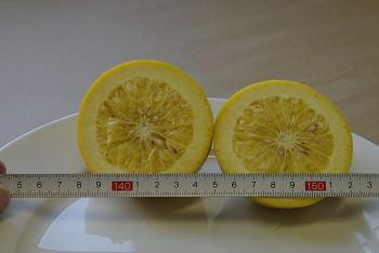 """""""CHIRONJA"""" - Orangelo  - (C.sinensis x C. paradisi) - Citrumelo"""