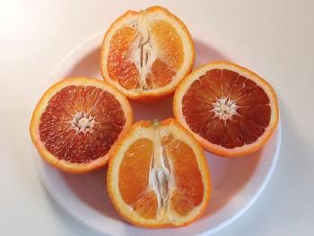 """Citrus sinensis """"SANGUINELLO"""" (L.) Osbeck - Citrumelo"""