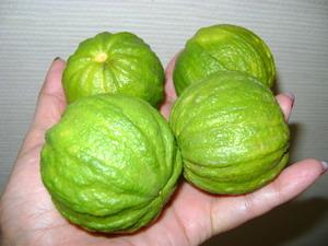 """CANALICULATA"" - (C. limon x C. sinensis) - Citrumelo"