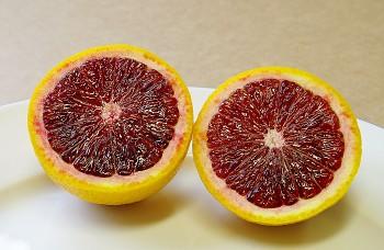 "Citrus sinensis ""MORO"" (L.) Osbeck - Citrumelo"