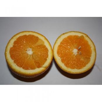 """Citrus sinensis """"CALABRIA"""" (L.) Osbeck - Citrumelo"""