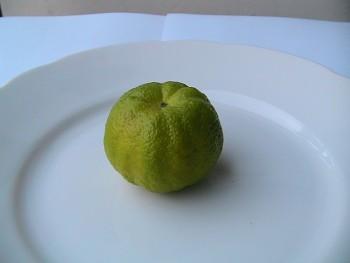 """PURSTA - PURSHA"" - ""Sladký citroník"" - (C. limetta x ?) - Citrumelo"
