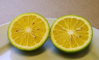 Citrus kotokan - Citrumelo